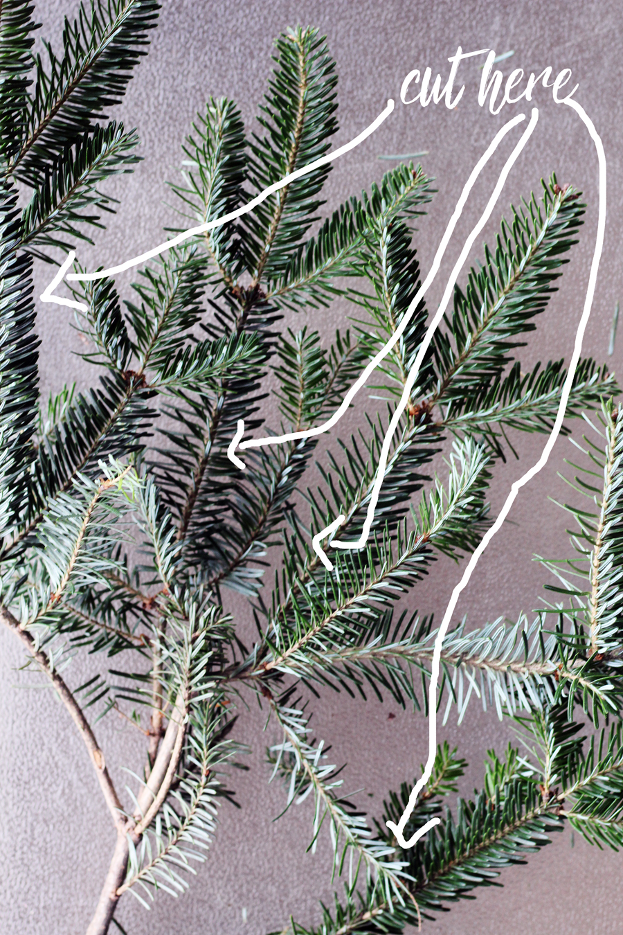 Illustration on where to cut the branches to create your natural Christmas wreath.