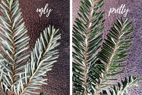 Arrange your fir branches so the pretty side is facing forward on your natural Christmas wreath.